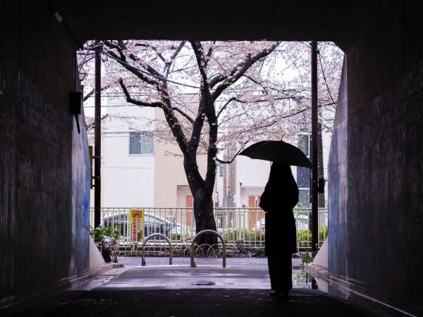 四季によって違う雨の種類
