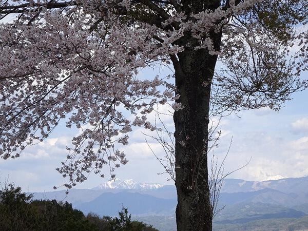 枝の間からは、仙丈ヶ岳・北岳・間の岳などが見られます。