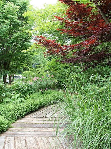 シャガの庭