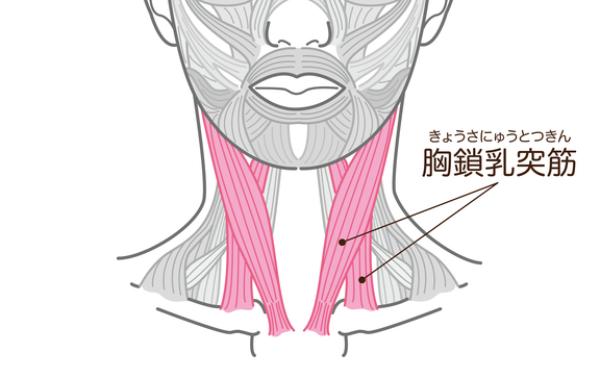 「胸鎖乳突筋」をほぐして横顔すっきり