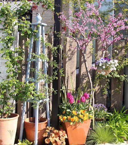 チューリップは「パープルフラッグ」、右奥に「ムスカリ」、後ろのピンクの花の木は「アメリカハナズオウ」です。