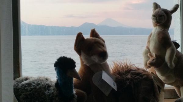 オーストラリア固有種の動物のぬいぐるみを旅の仲間にして、富士山の見える日本の海まで