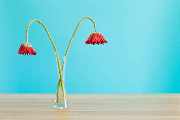 切り花は、いつどのタイミングで捨てればいい?