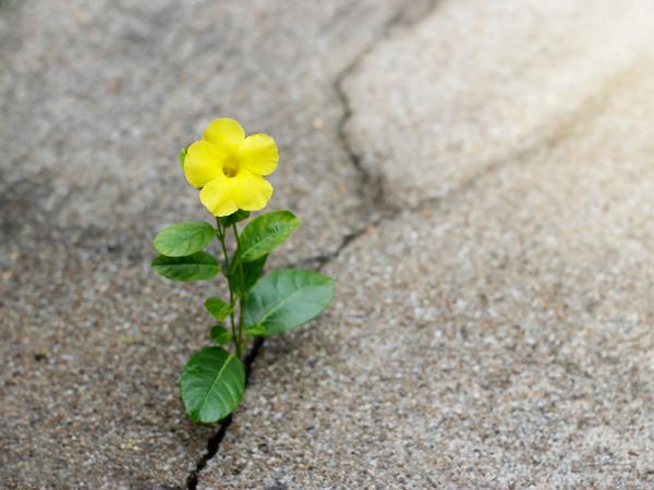 アスファルトの間から花が咲くのはなぜ?