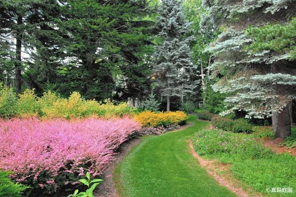 真鍋庭園|これが日本?樹木の美しさを知る場所