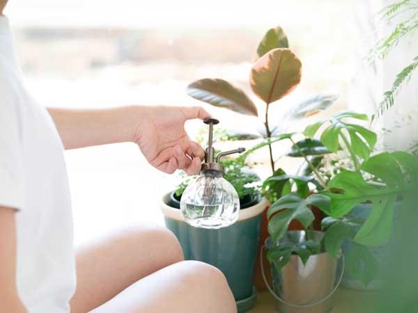 観葉植物を育てるときのポイント