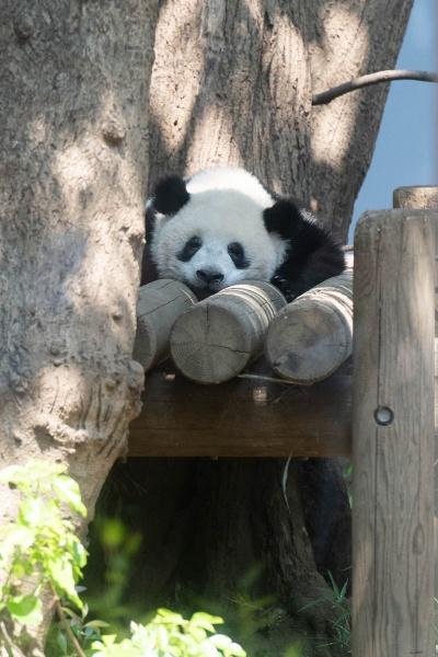 1歳。笑いながら眠っているみたい。どんな夢を見ているの?