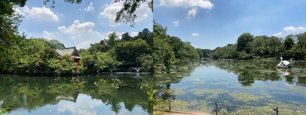 桜やボート池で有名な井の頭公園