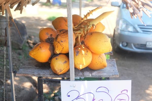 ドライブ中に道端のキングココナツジュースを試す。スリランカでは定番のジュース。
