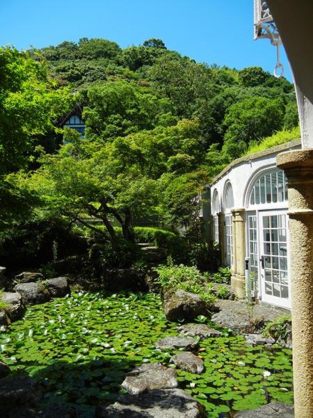 6月頃であれば、館内の池で咲く、睡蓮の花と合わせて楽しめるでしょう。