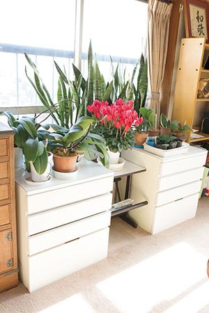 お気に入りの植物たちはそのまま、使いやすさがアップした窓際