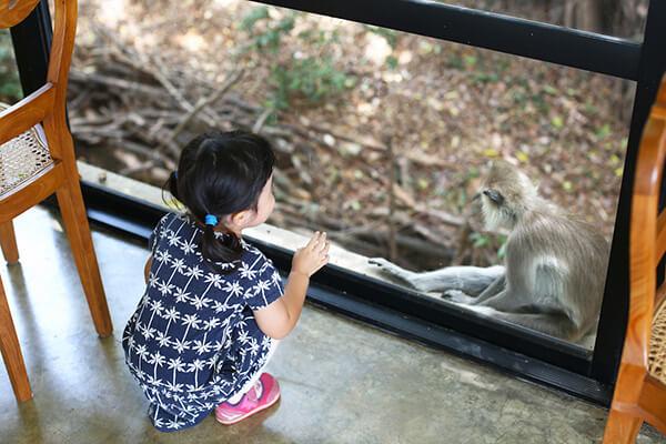 自然を生かしたこのホテルには動物たちも多く訪れる