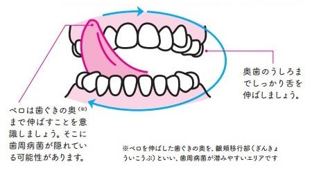 殺菌ベロ回しのやり方:べロを伸ばして、歯ぐき「表面」を右上から左下へ、ゆっくり円を描くようにぐるりと回す