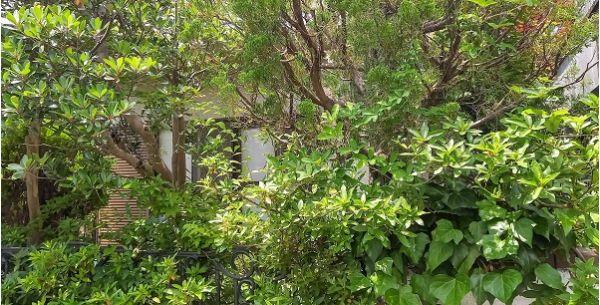 まるで雑木林のような我が家の庭