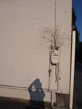 お店の水道メーターに刺さっていた枝