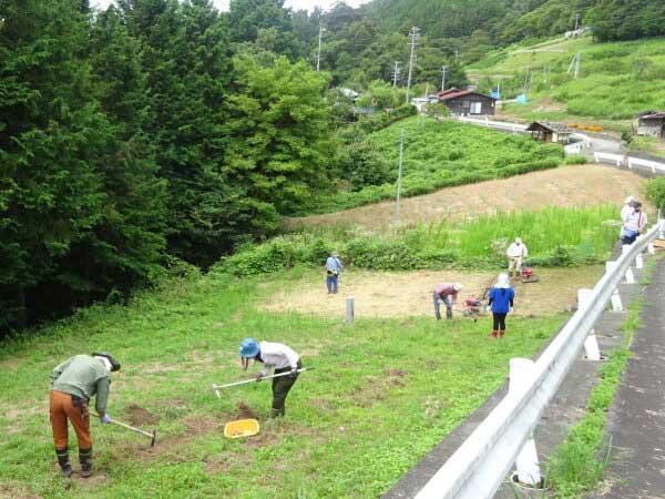 下栗芋の収穫とソバの種まき