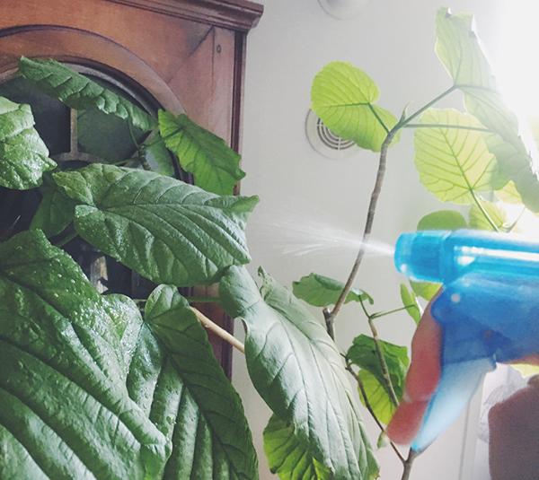 えみな+水でえみな水を作り、スプレーボトルに入れ家中のお掃除洗剤に