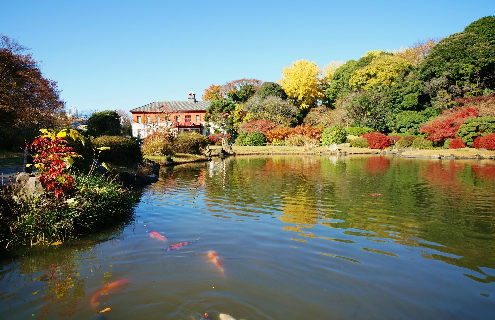 11月 新温室ができた小石川植物園で小笠原諸島の植物を観察