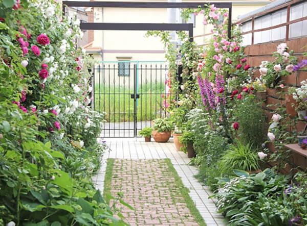 前庭で咲き誇るバラたち