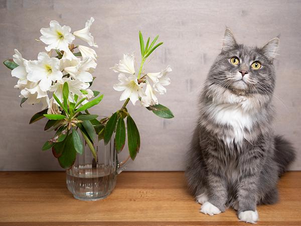 飼い猫がいても花を飾りたい!猫に危険な花は?