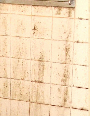 お風呂の3大汚れ2:カビ