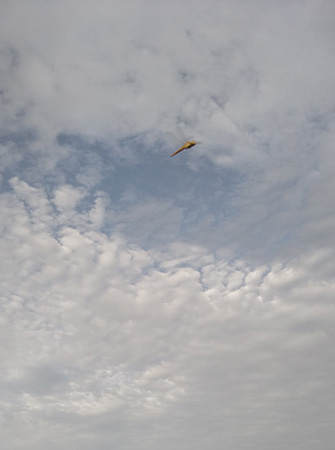 見上げれば夏の空、トンボが飛んでいます