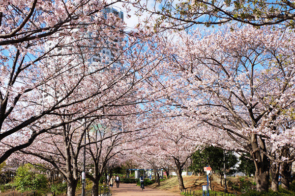 4月1日の染井吉野