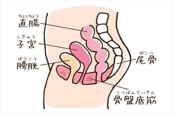 骨盤底筋とはどんな筋肉?