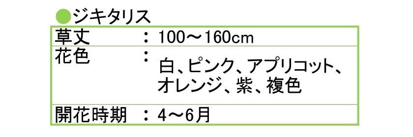 ジキタリスの開花時期は4~6月