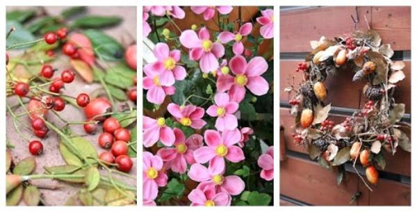 可愛いバラの実で毎年リースを作ります