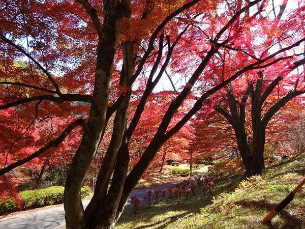 道の両側の紅葉