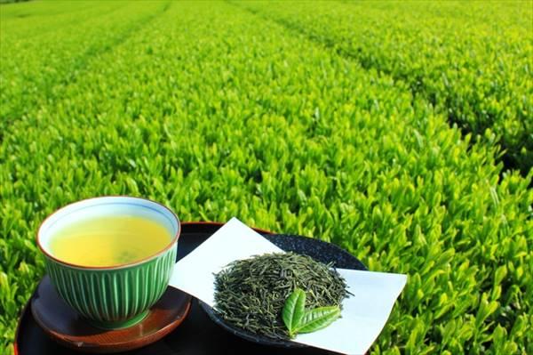 コロナ禍の健康課題に緑茶のカテキンがおすすめ