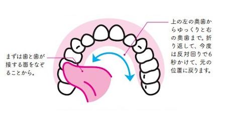 簡単ベロ回しのやり方:上あごの歯と歯が接する面をなぞるようにベロを回す
