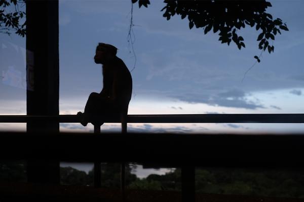 カンダラマの客室のテラス、猿が訪れる(ヘリタンスカンダラマ)