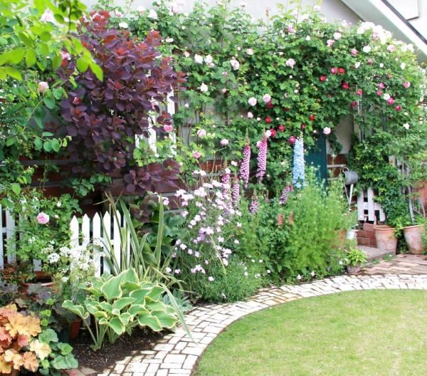 庭に咲いたジキタリス
