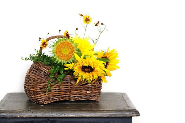 ヒマワリの花の飾り方:観葉植物を足してみる