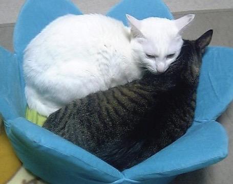 白猫と黒猫
