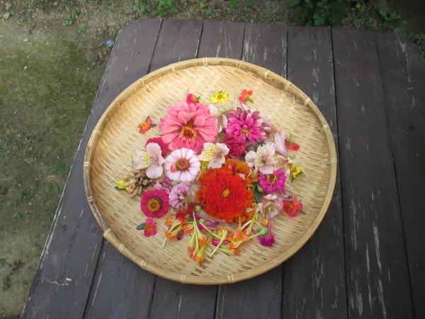 いろんな花びらを乾燥させます