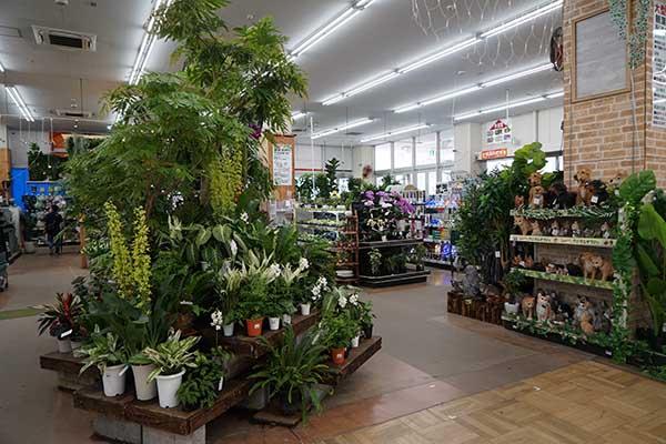 初心者は観葉植物をどこで買えばいい?