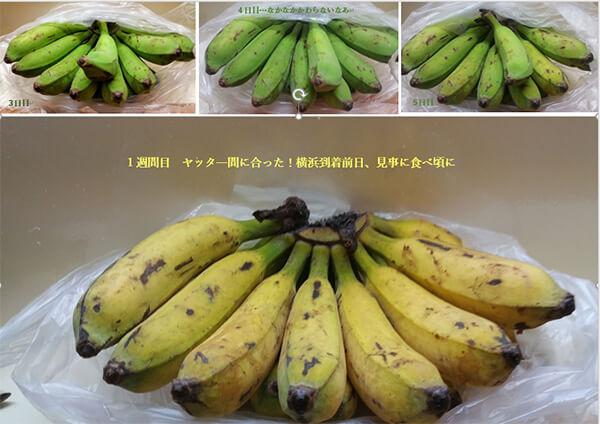 ラバウルで買ったバナナ