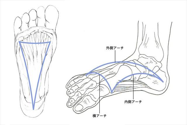 足のアーチ構造(横アーチ・外側縦アーチ・内側縦アーチ)