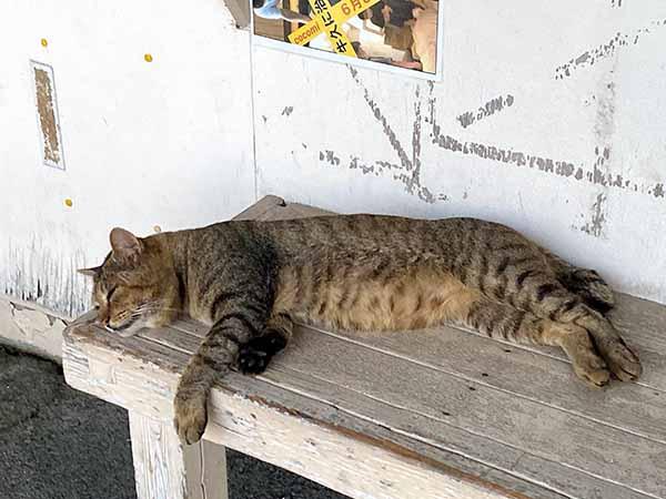 いすみ鉄道で会える猫