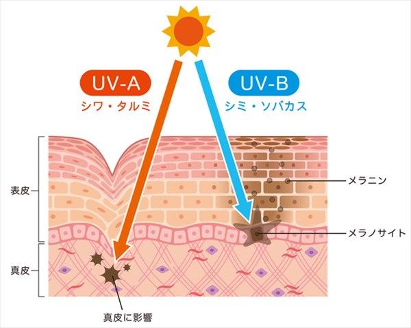 紫外線A波の影響もたるみ・シワの原因に