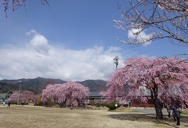 中央が校舎と枝垂れ桜