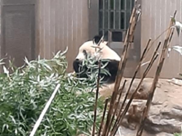 さよならシャンシャン 久しぶりの上野動物園