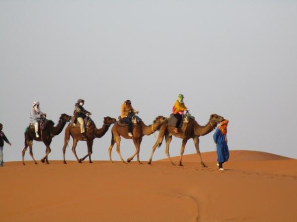 ラクダに乗ったグループ