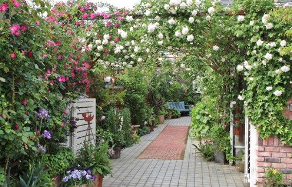 バラで囲まれた風景