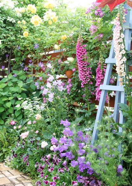 花壇後方右がジキタリス、手前右から二ゲラ(まだ蕾)、紫と薄紫色のカンパニュラ、白色がオルラヤ。 バラは左上の黄色がグラハムローマス、右上から左下へローズ色のファイルフェンブロー、 左下ピンク色のラベンダードリーム、淡いピンク色のラジオタイムス、白色のマチルダ