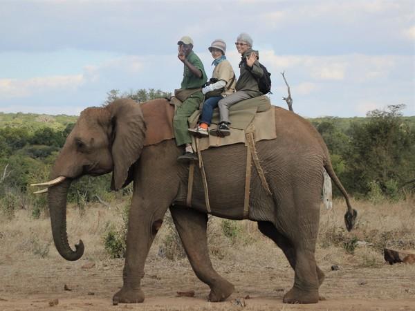 私が乗ったのは30歳くらいの象