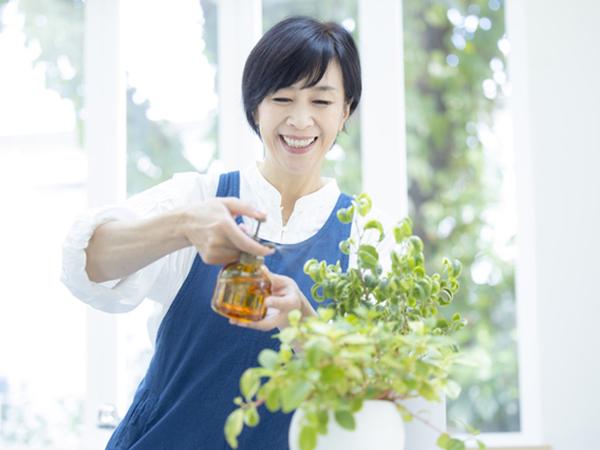 ダイソーの観葉植物の植え替えアイテムにも注目